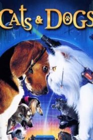 Cats & Dogs Asian Drama Movie Watch Online