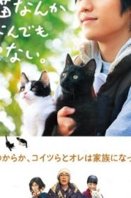 Cats Don't Come When You Call Asian Drama Movie Watch Online